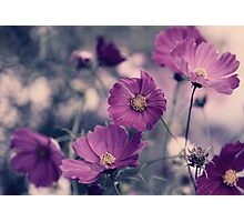 A Garden of Purple Photographic Print