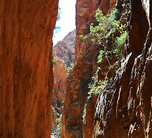 Standley Chasm, West MacDonnell National Park by DashTravels