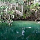 manatee zone by photo-Art