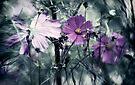 Garden of Eden by yolanda