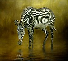 Zebra Crossing by Tarrby