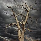 Branching Out by Peter Daalder