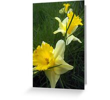 Trail of Easter Lily's Greeting Card