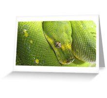 Chondropython Viridis (Sarong) Greeting Card