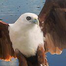 The Kite by byronbackyard