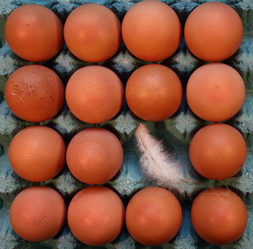 Eggscape by Paul Pasco