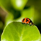 Ladybird Ladybird fly away home.... #2 by Mark Elshout
