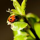 Ladybird Ladybird fly away home.... #3 by Mark Elshout