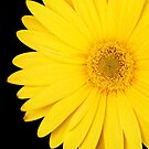Yellow Bikini by DavidROMAN