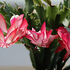 Easter Cactus by karina5