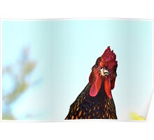Rooster On A Rampage Poster