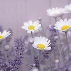 Daisies in Lavendar by Yool