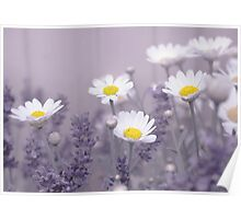 Daisies in Lavendar Poster