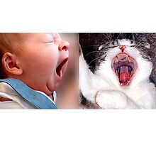 Yawning is contagious ! Photographic Print