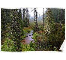 High Cascades Bog Poster