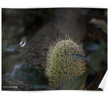 macro flora 002 Poster