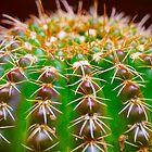 Cactus  by Matt Hill