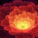 Phoenix Rose by James McKenzie