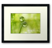Dew Drop Green Framed Print