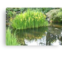 Daffodil Reflection at Fitzroy Gardens Canvas Print