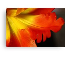 Feather-like  Petals Canvas Print