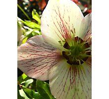 Bugs Life Photographic Print