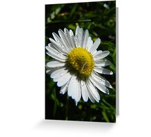 Sweet Daisy Greeting Card