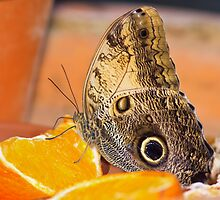Orange Morpho by Delfino