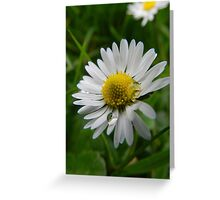 Daisy Duo Greeting Card