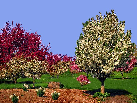 Spring  by Linda Miller Gesualdo