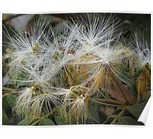 Jungle Blossoms - Flores De LA Selva Poster