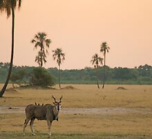 Days end by Explorations Africa Dan MacKenzie