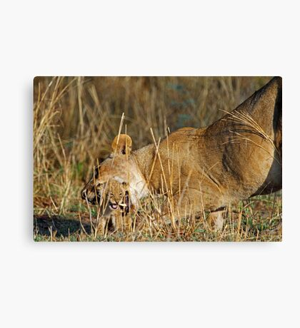 A mothers tenderness Canvas Print