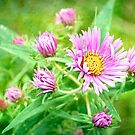 Wildflowers in Pink and Yellow by Scott Mitchell