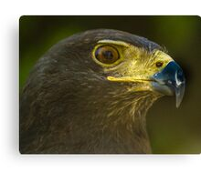 Harris Eagle Canvas Print