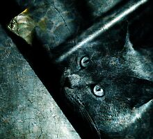 The abyss cat by Laura Melis