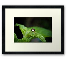 Cute Green Bug-Eyed Insect Framed Print