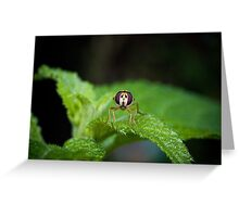 Cute Green Bug-Eyed Insect Greeting Card