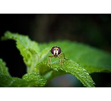 Cute Green Bug-Eyed Insect Photographic Print