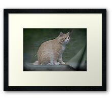Marvelous Max The Marmalade Cat Framed Print