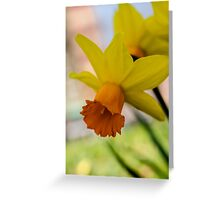 Downward Daffodil  Greeting Card