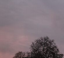 Reaching the sky by GFhoto