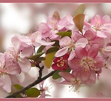 Crabapple Blossoms Showing Off by Teddie McConnell
