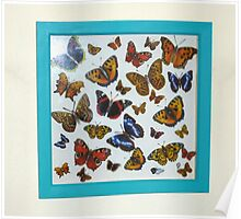 New Butterfly Collection Poster