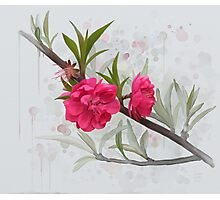 Pink flowers, watercolros Photographic Print