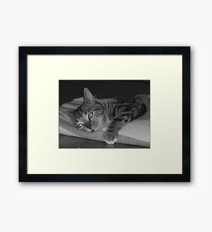 Playful Framed Print