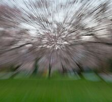 Cherry Blossom Abstract by Dan Lauf