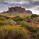 Superstition Spring by Sue  Cullumber