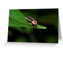 Lighting Bug Greeting Card