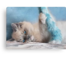 Playtime with Chianti Canvas Print